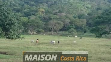 immobilier costa rica : annonce immobiliere à NICOYA Guanacaste au costa rica