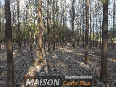 immobilier costa rica : annonce immobiliere à SANTA CRUZ Guanacaste au costa rica