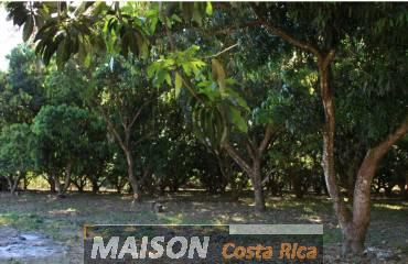 immobilier costa rica : annonce immobiliere à PAQUERA Puntarenas au costa rica